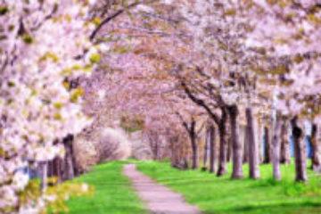 姿勢が大改善し、股関節痛も改善!<br>~念願叶って、再び友人と満開の桜並木道を歩けるように~